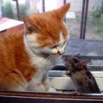 tikus dan kucing