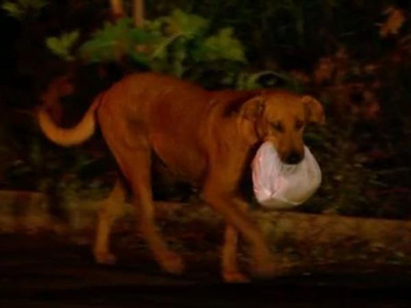 Anjing berjalan 4 Km