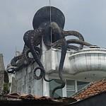 rumah-gurita-2