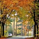 8-Musim Gugur di Taman Nasional Hoga Veluwe