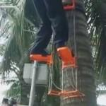 Alat panjat kelapa