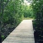 Wisata mangrove Probolinggo-2
