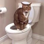kucing berak