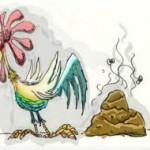 tahi ayam