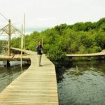 Mangrove di Probolinggo