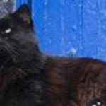 2c-blackie-si-kucing-hitam-rev1