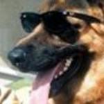 5c-gunther-anjing-penggembala-jerman-rev1