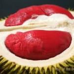 buah durian merah