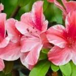 bunga-terindah