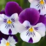 bunga-terindah6