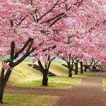 Bunga indah di china