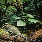 TN Lorentz Perwakilan Ekosistem Terlengkap di Asia Pasifik