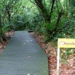 mangrove di singapore