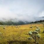5 Tempat Terbaik Untuk Melihat Edelweiss di Indonesia
