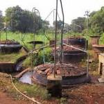 4 Desa di Pasuruan gunakan biogas kotoran sapi