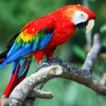burung beo warna warni