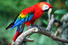 Burung Beo Warna Warni Alumnimaterdei Com