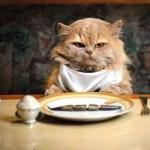 memberi makanan ke kucing