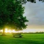 sinar matahari pagi