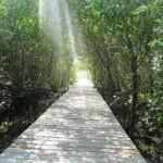 ekowisata mangrove wonorejo surabaya