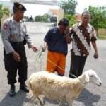 pencuri kambing