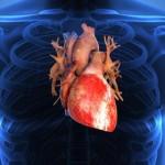 organ-jantung