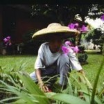 Pemberian kepada tukang kebun
