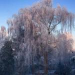 Akibat global warming-Foto dari rumah Poppy Dunda-2