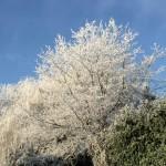 Akibat global warming-Foto dari rumah Poppy Dunda-5