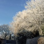 Akibat global warming-Foto dari rumah Poppy Dunda-6