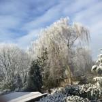 Winter di Alpen bersama Husky-dari Poppy-1