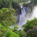2-Hutan Amazon Museum dengan koleksi Flora-Fauna terbesar di dunia