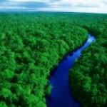 4-Hutan Amazon Wilayahnya mencakup 9 sekaligus