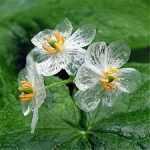 bunga indah dan langka