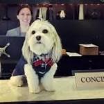 Anjing penyambut tamu The Nikko Hotel di San Fransisco