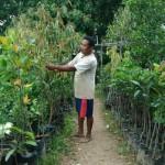 Sentra Bibit Tanaman di Purworejo
