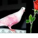 Mawar putih dan burung
