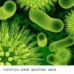 bakteri baik dan jahat