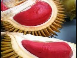 durian indonesia merah
