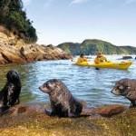 eco tourism new zealand