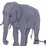 Belajar dari Tali Gajah