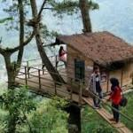 Malang punya Rumah Pohon tingginya 1340 mdpl