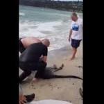 Kanguru Tenggelam di Pantai selamat berkat Polisi melakukan CPR