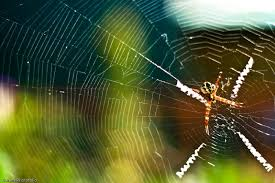 keindahan sarang laba2