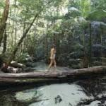 Pulau Fraser Hutan Hujan tumbuh di Pasir