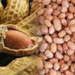 Sekantong bibit Kacang Tanah