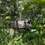 Sensasi Kopi Luwak di Bali Pulina