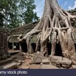 silk cotton trees of ta prohm