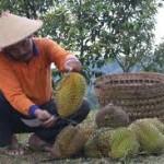 Sensasi Durian sambil menanti Sunset di Embung Banjaroya