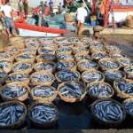 Ikan Makan Korban Tsunami-itu Hoax